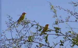 В Краснодарском крае отмечают 100-летний юбилей Международного Дня птиц