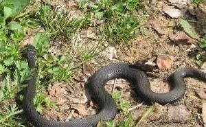 Появившиеся в Краснодаре змеи пугают горожан