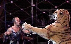 После нападения на дрессировщика во время циркового представления таинственно исчез тигр