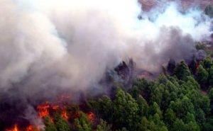 Кондратьев предлагает ужесточить наказание за пожары правообладателям земельных участков