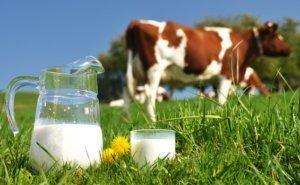 Эксперты прогнозируют увеличение объёмов продажи молока на Кубани