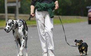 В Сочи ужесточают контроль за выгулом собак