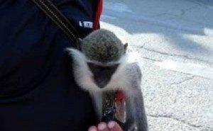 В Краснодаре полиция вышла в рейд по зообизнесменам