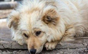В Сочи запущена программа бесплатной стерилизации бездомных животных