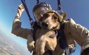 Собака-парашютист совершила уникальный прыжок в Новороссийске
