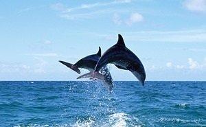 В лесу в Сочи туристы наткнулись на мёртвого дельфина