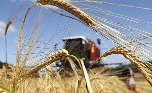 На Кубани собрано более 5 млн тонн пшеницы