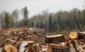 Родственники Александра Ткачёва уничтожают лесозащитные насаждения