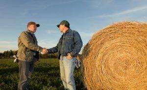 В Краснодарский край перенять опыт приехали фермеры из Австралии