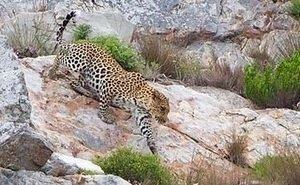 В Кавказском заповеднике появится «Тропа леопарда»
