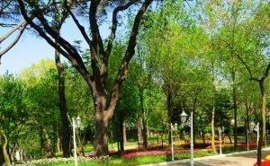 На Кубани зелёные зоны на кадастровый учёт поставили лишь 10 муниципалитетов