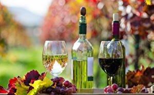 На Кубани приступили к сбору технических сортов винограда