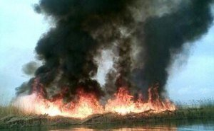 В Анапе локализован пожар в плавнях