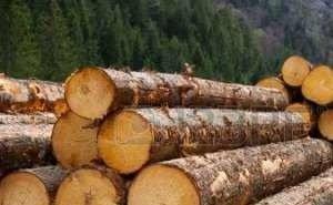 WWF обвиняет Минприроды Кубани в возможном ущербе от вырубки леса на 136 млн рублей