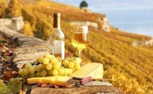 На Кубани предлагают агротуры по винодельням