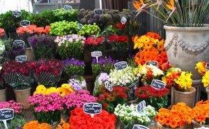 В Краснодаре заработал крупнейший в ЮФО торговый центр с цветочной ярмаркой