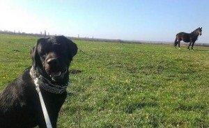 «Как мне ухаживать за своей собакой — это моё личное дело», — хозяин помытого на автомойке пса