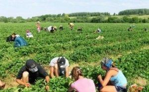 На Кубани летом было трудоустроено 20 тысяч подростков
