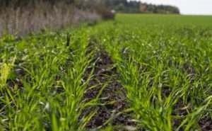 Льготные займы помогли фермерам, понесшим убытки от града, посеять озимые