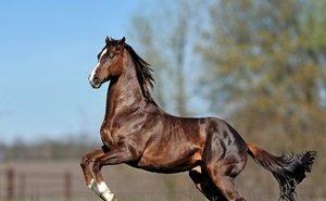 На испытания племенных лошадей в 2019 году власти Кубани направят 50 млн рублей
