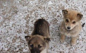 Краснодарский краевой суд запретил умерщвлять бездомных животных в Сочи