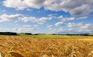 Аренда земли пополнила бюджет Кубани на 1,6 млрд рублей