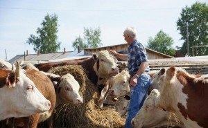 Кубанским фермерам выделяют более 1 млрд рублей субсидий