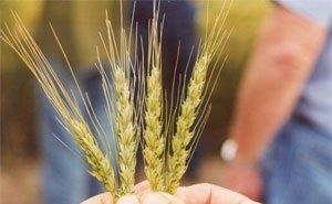 В 2019 году сельхозкооперативы Кубани получат 380 млн рублей