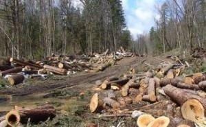 Крупный инвестпроект на Кубани «развязал руки» добытчикам древесины