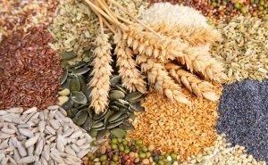 Элитное семеноводство Кубани просубсидируют в 2019 году на 25% больше