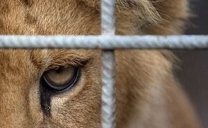 «Сафари-парк» Краснодара попал в поле зрения прокуратуры