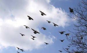 Массовой гибелью птиц на Кубани заинтересовалась прокуратура