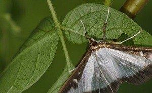 На борьбу с насекомыми-вредителями в Сочи потратят в 4 раза больше средств