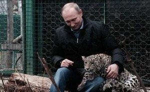 Правда ли, что Центр по разведению леопардов в Сочи оказался под угрозой закрытия?