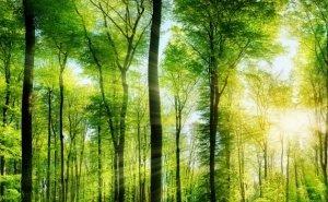 На сохранение лесов власти Кубани выделяют более 185 млн рублей