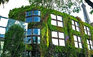 Краснодар предлагают озеленять вертикально