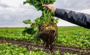 На Кубани думают над решением проблем отечественного семеноводства
