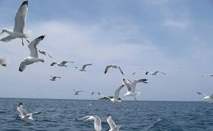 В Сочи обнаружены птицы, ранее сюда не прилетавшие