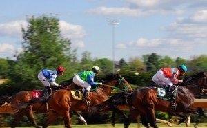 Кубанским коневодам выделяют 50 млн рублей