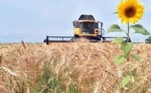 Власти Кубани рассчитывают на урожай зерновых не менее 10 млн тонн