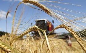 На долю Кубани приходится 10% валовой сельхозпродукции страны