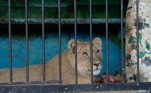 Директору цирка, в котором на ребёнка напала львица, не удалось обжаловать приговор