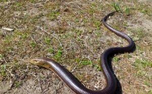 Посетителей сочинского «Дендрария» пугают змеи