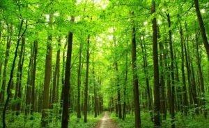 На Кубани с начала года высажено 60,5 тысяч деревьев