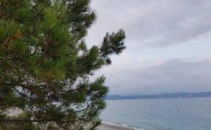 Сочинцам удалось приостановить вырубку реликтовых сосен на верхней набережной