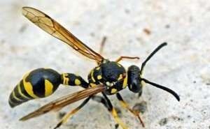В Краснодарском крае укусы насекомых уже дважды становились причиной ДТП