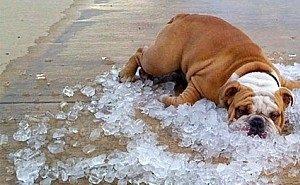 В Краснодарском крае установилась аномальная для июня жара