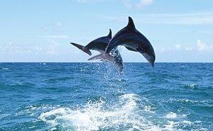 В Чёрном море сосчитают дельфинов