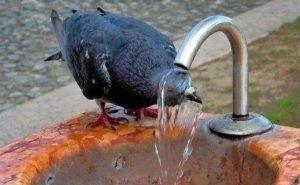 На Кубани объявлено экстренное предупреждение по жаре