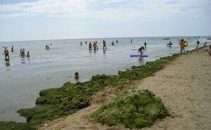 В Анапе неделю не могут справиться с морскими водорослями